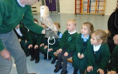 Kielder owls visit Reception