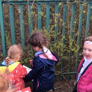 Tree Classifying in Year 1
