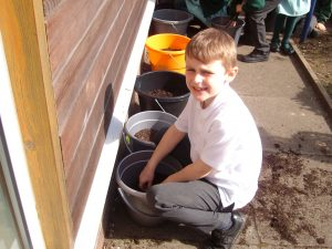Potato Planting in Year 2