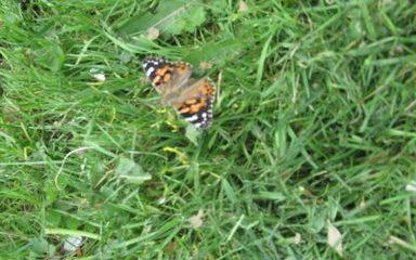 Bye-Bye Butterflies!